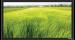 Цены на Экран Vutec ELEGANTE Fixed 128*227 MatteGrey Особенности: Превосходное качество по умеренной цене Рама 4 см в ширину Абсолютно плоское состояние полотна Прочный легкий алюминиевый корпус Черное бархатное покрытие рамы Настенный крепеж в комплекте Полотна: