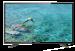 Цены на Thomson T32D20DH - 01B Выход аудио коаксиальный  -  Есть,   AV - вход  -  Есть,   Встроенный медиа - плеер  -  Есть,   WiDi  -  Нет,   Управление жестами  -  Нет,   Цвет  -  Черный,   Функция Time Shift  -  Есть,   Диагональ  -  32,   Глубина с подставкой  -  19,   Вход VGA  -  Есть,   Вход HDMI  -  3