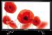 Цены на Telefunken Телевизор Telefunken TF - LED39S57T2 TF - LED39S57T2